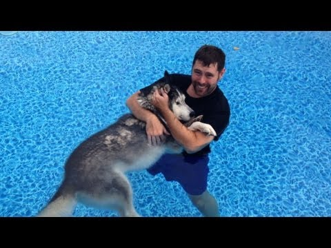 Husky Water Therapy Our Miracle Dog Cure!