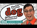 Dog idioms - Learn English idioms with The Teacher