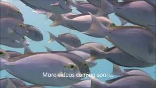 Diving Bodu Finolhu South Ari Maldives