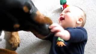 كلب يضحك طفل