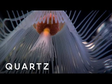 Finding life in the deep sea