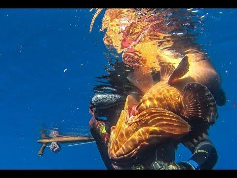 Spearfishing 🇬🇷   Huge Dusky Grouper+Dive details - Ψαροντούφεκο Τεράστιος Ροφός+Ανάλυση βουτιάς ✅