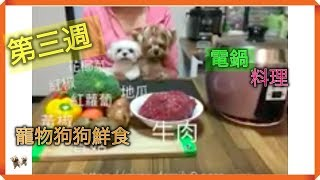寵物狗狗鮮食簡單做–第三週便當 (電鍋料理)五色鮮蔬牛肉丸|Easy Homemade Dog Food#3rd Week