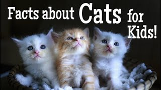 Facts about Cats for Kids | Classroom Learning Video
