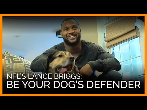 Lance Briggs Exclusive Interview