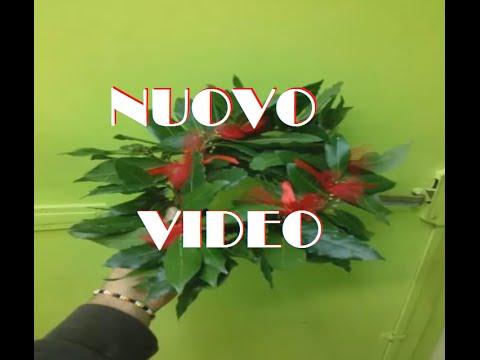 Il Fiorista Creazione Coroncina Di Alloro Per Laurea Nuovo Video