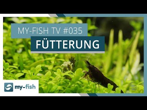Fische richtig füttern | my-fish TV