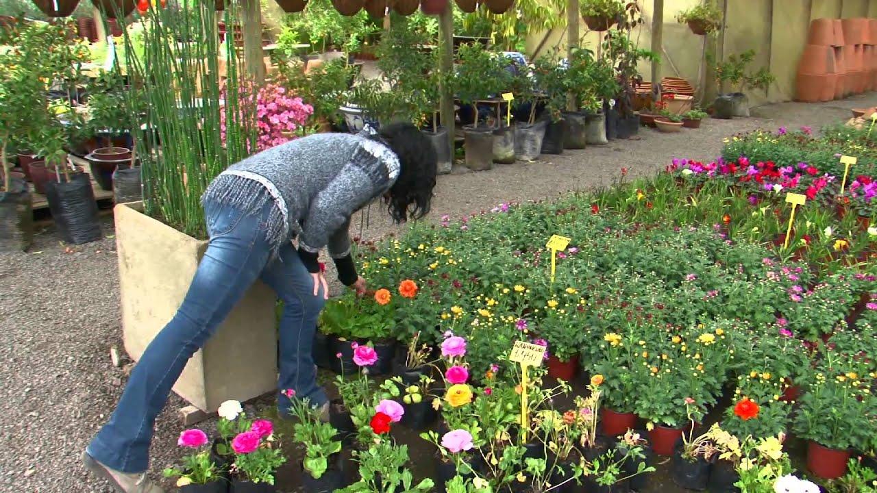 Nota plantas florales hd casa y vida for Catalogo de flores de jardin