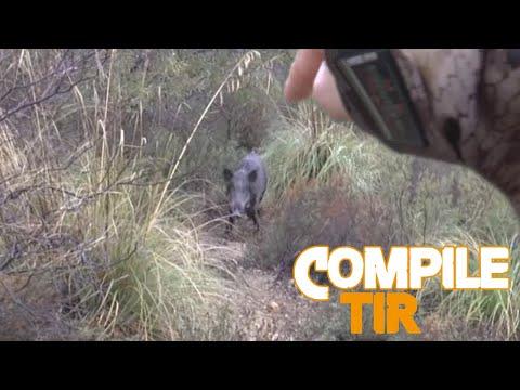 Chasse sangliers/ Top 10 best shots hunting Wild boar / Battue sanglier en Tunisie. Ovini