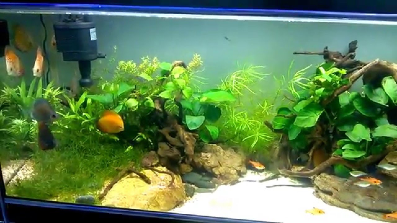 Aquarium fish tank in chennai - Discus Aquarium In Aquarium Design India Chennai Spencer Plaza