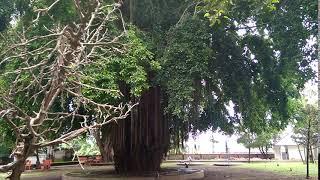 Лес обезьян Убуд Бали   Бронировать/ купить тур на Бали из Калининграда, Польши Тел. +7(4012)900095