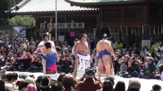 八坂神社 御創建四百年記念大祭 記念行事 不知火型の土俵入りだそうです。