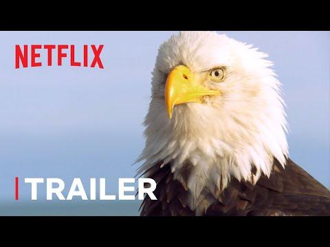 Absurd Planet Trailer 🌎 New Series Trailer | Netflix Futures
