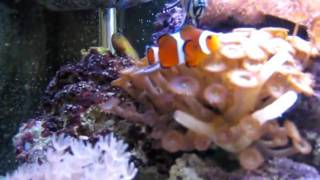125l marine aquarium 6 months old clean glass