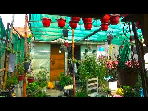 729# Garden Overview of February |  Vegetable Gardening kron ya Horticulture Gardening