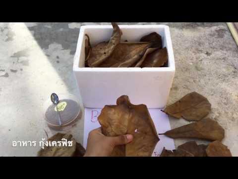 อาการกุ้งเครฟิช ตอนที่ 1 [Make is Me] by BOOMz Crayfish EP.3