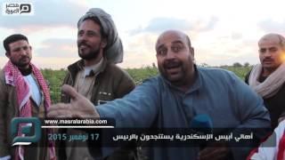 بالفيديو| في الإسكندرية.. رائحة عفن المحاصيل تفوح وتعويضات السيسي لا تكفي