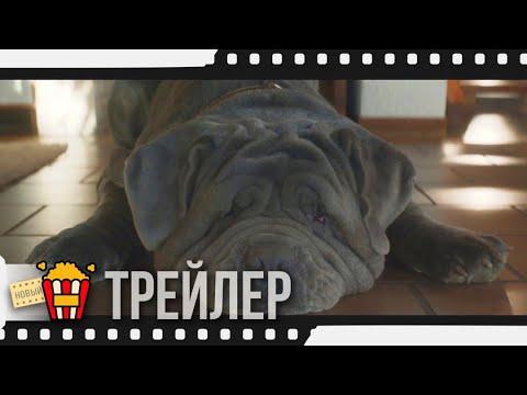 МОЯ СОБАКА — ИДИОТ — Русский трейлер | 2020 | Шарлотта Генсбур, Иван Атталь, Паскаль Арбийо
