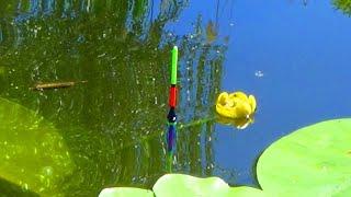 Рыбалка на карася в зарослях КУВШИНКИ Активный клёв на поплавочную удочку Рыбалка на поплавок