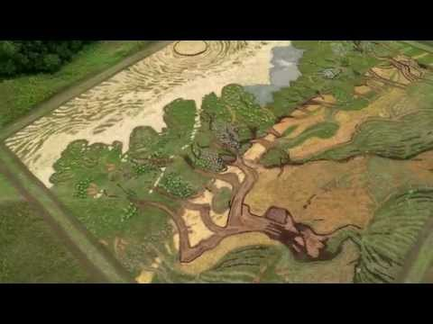 Olive Trees Flyover, Of Us and Art: The 100 Videos Project, Episode 32