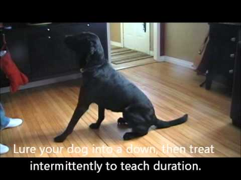 How To Stop Your Dog From Barking At The Door Youtube