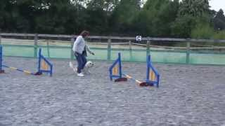 Dandie Dinmont Terrier Dog Jackson Does His Second Full Agility Course Happy Funny Dog