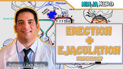 Male Reproductive System | Erection & Ejaculation