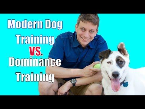 The Dominance Myth In Dog Training Explained