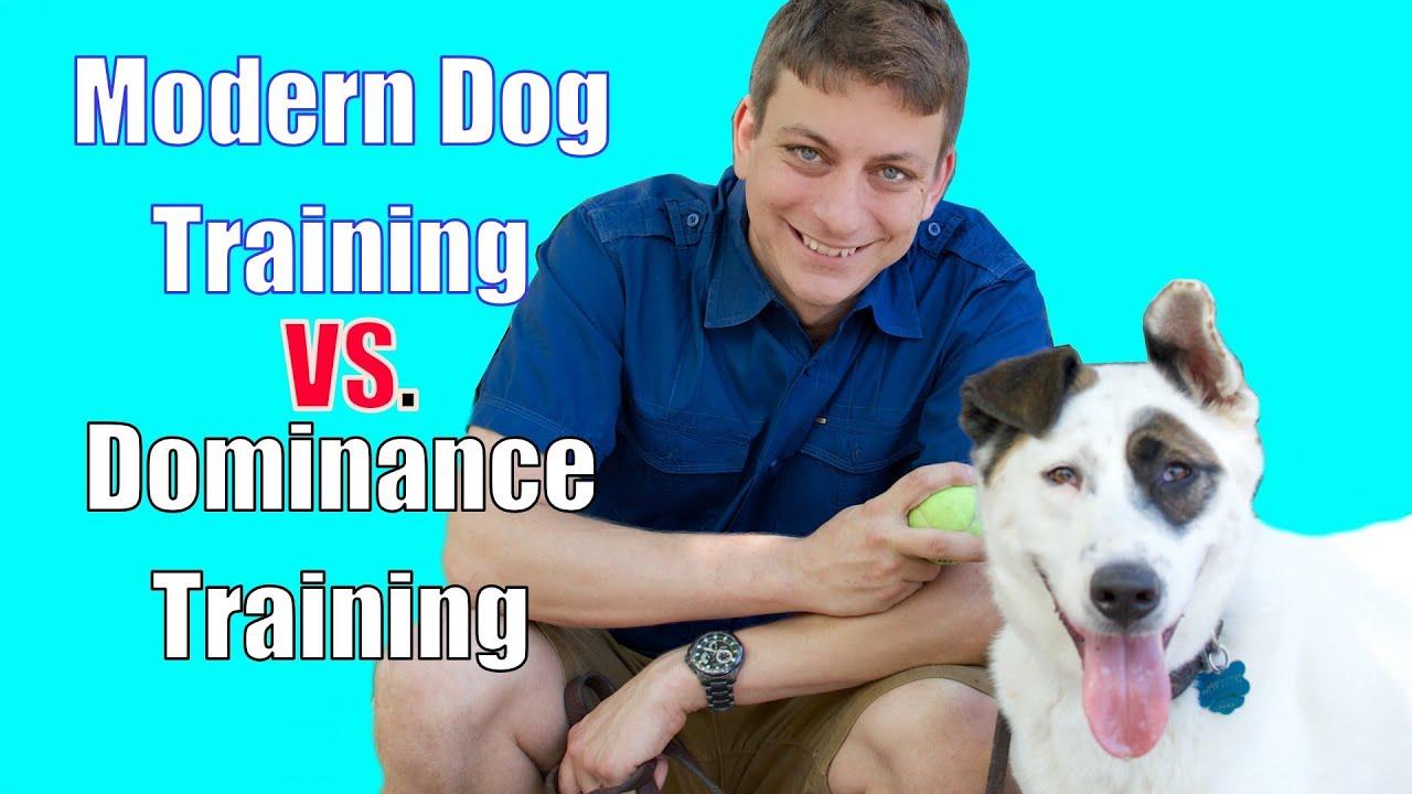 Dog Training Youtube Zak