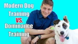 The Dominance Myth In Dog Training Explained