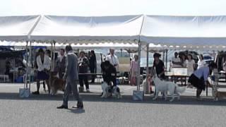 H25年9月23日(日)2日間連続の JKCドッグショー島根県クラブ連合会展に ...