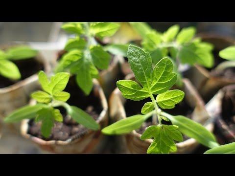 Выращивание рассады. Бизнес идея