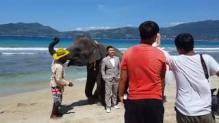 О. Пхукет. Фотосессия свадьбы на слонах