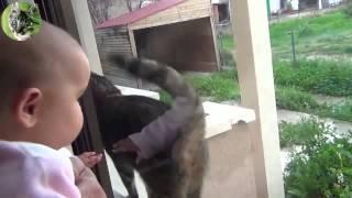 Смешные ролики про кошек и детей. Funny videos about cats and children