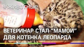 """Ветеринар стал """"мамой"""" для котенка леопарда"""