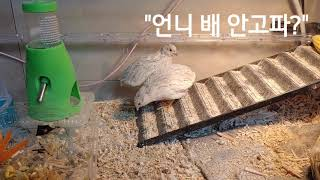 메추리시트콤 ep94 전쟁의 서막 탄탄대로를 걷는 철미…