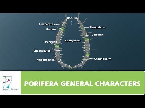 PORIFERA GENERAL CHARACTERS
