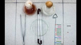 Микробиология#2 (Экология бактерий) (Начало в 32:00)