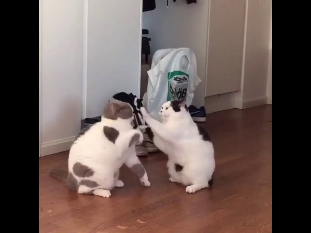 Brutal cat fight!