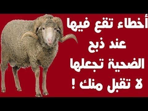 شروط ذبح الاضحيه فى عيد الاضحى وأخطاء تقع فيها تجعلها لا تقبل منك اخبرنا بها الرسول Youtube