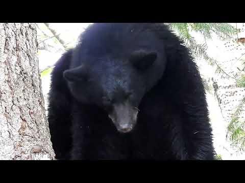 Baixar Bear Powell - Download Bear Powell | DL Músicas