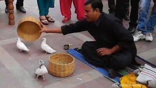 कबूतर बनाने वाला जादू  | Indian Magic | Jadu | magic trick
