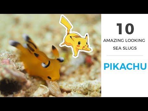 10 Amazing Sea Slugs (with Footage)