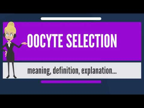 What is OOCYTE SELECTION? What does OOCYTE SELECTION mean? OOCYTE SELECTION meaning & explanation