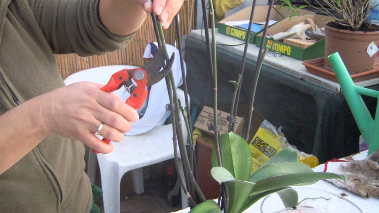 Image result for poda orquidea