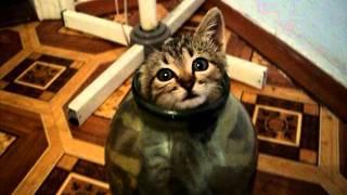 Кошка в банке