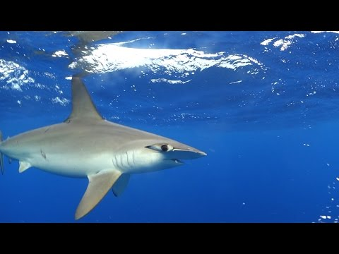 Sea of Cortez - Baja California Sur, Mexico - Diving with Hammerhead Sharks, Sea lions, Whale Sharks