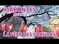 Le Japon Au Printemps (vlog Japon #61)