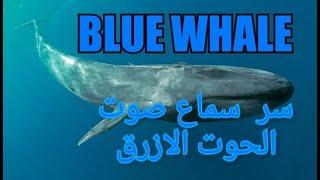 سر سماع صوت الحوت الازرق على سواحل البحر المتوسط فى 20 12 2019 Blue Whale シロナガスクジラ Youtube