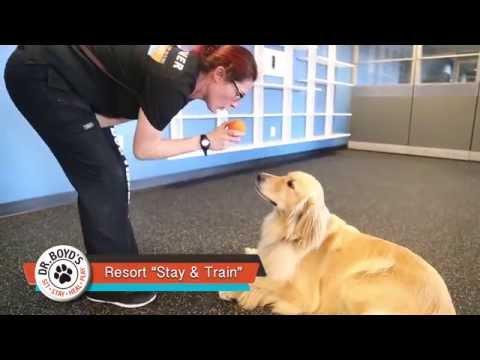 Dr Boyds Dog Training